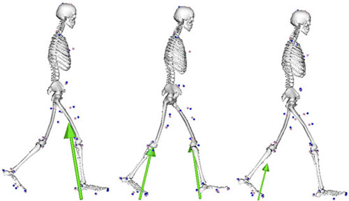 how to draw moments at a joint biomechanics